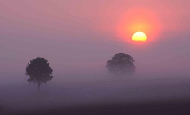 Goldene Scheibe im Nebel