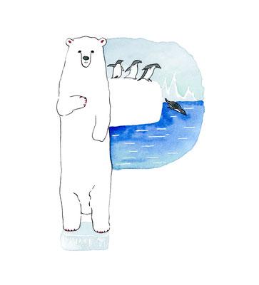アニマルアルファベット「Polor Bear&Penguin」:水彩