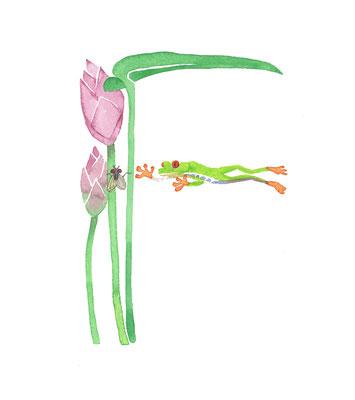 アニマルアルファベット「Frog」:水彩