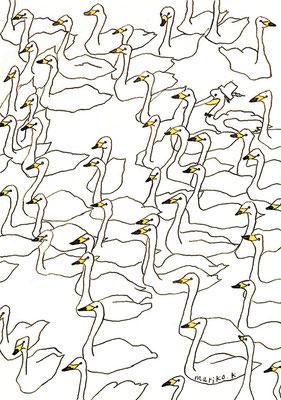 白鳥:カラーインク:B5