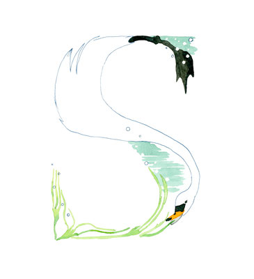 アニマルアルファベット「Swan」:水彩
