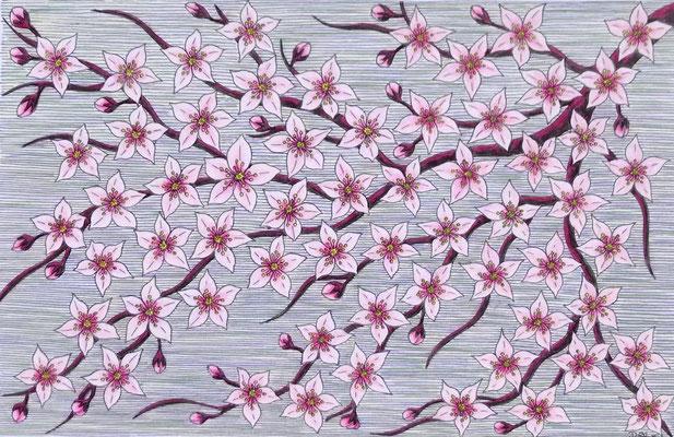Cherry Blossom, pencil on card