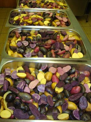 Bunte Kartoffelvielfalt aus unserem Garten: Rote Emalie, Linda, Violetta und Aspargus