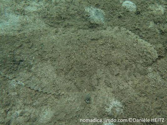 Brachirus heterolepis
