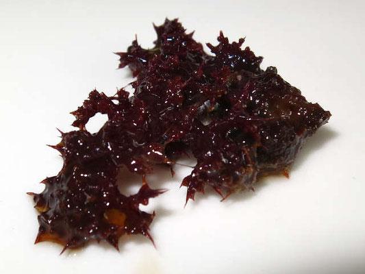 Dendronephthya  klunzingeri  échantillon