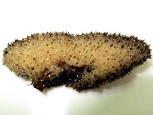 Scalarispongia  aqabaensis, échantillon