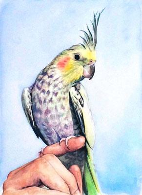 ペット 鳥 A4 リアル