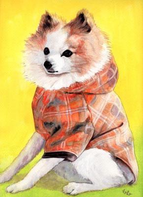 ペット 犬 A4 リアル