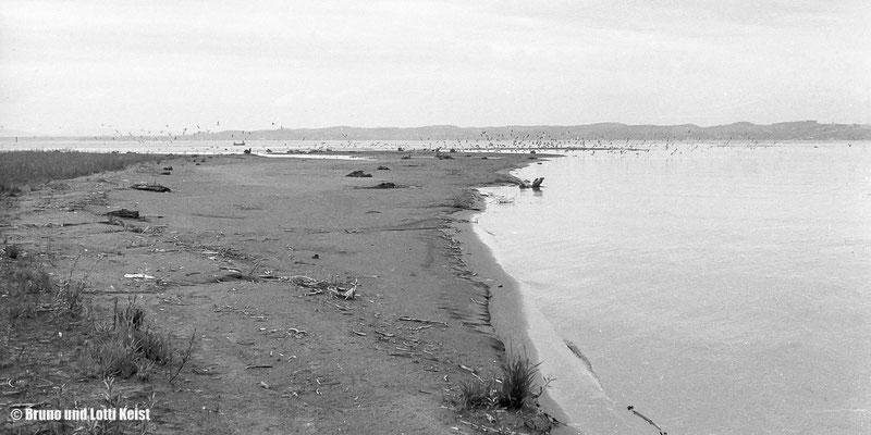 Sanddelta, Mündungsbereich Alpenrhein | 1969