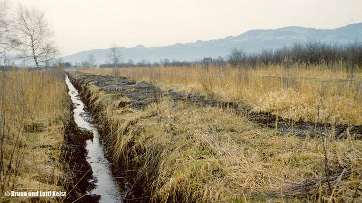 Höchster Ried, Entwässerungsgraben | 1983