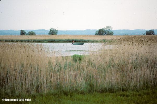 Innere Fussacher Bucht | 1984
