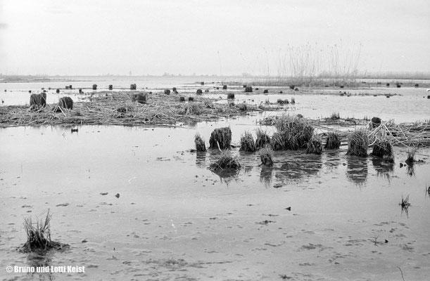 Innere Fussacher Bucht | 1967