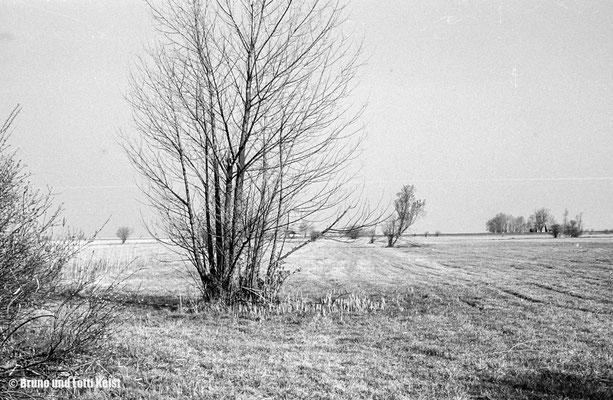 Gaissauer Ried | 1967