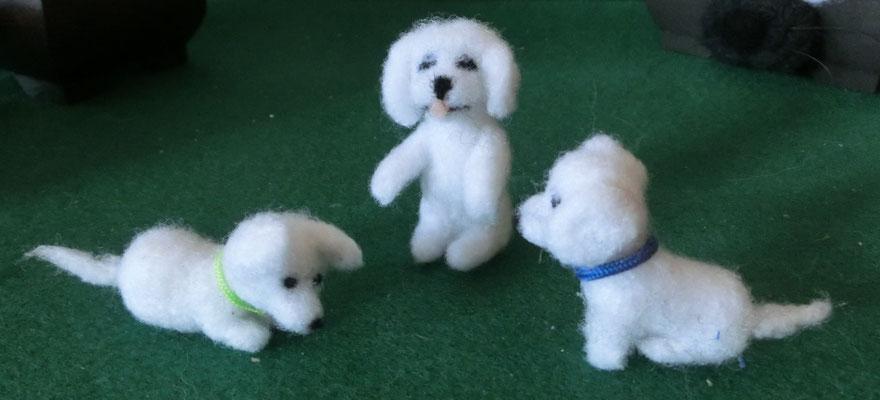 kleine weiße Hunde in verschiedenen Postionen