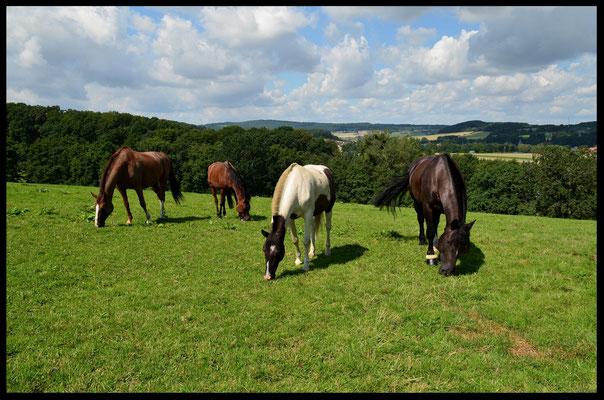 Artgerechte Pferdehaltung auf der Weide