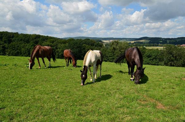 artgerechte Fütterung der Pferde auf der Weide