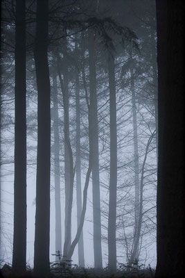 Forêt de sapin. (Thuisy)