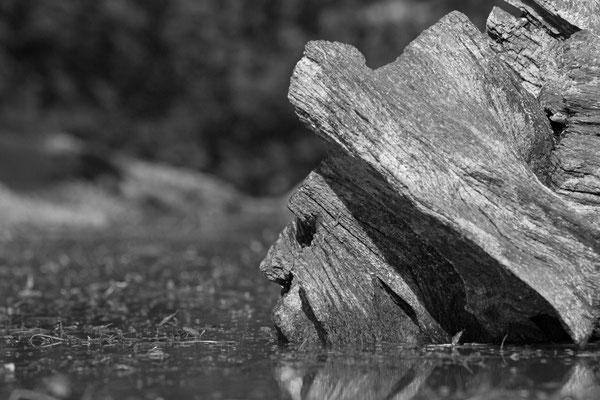 Mystère des bois... (Lac du temple).