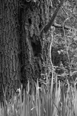 Mystère des bois... (Etang de Beaumont).