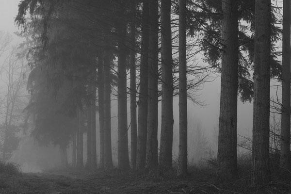 Matin brumeux en forêt d'Othe.