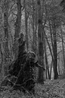 Mystère des bois... (Chennegy).
