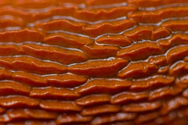 Limace rouge, Arion rufus. ((Parc naturel régional de la forêt d'Orient)