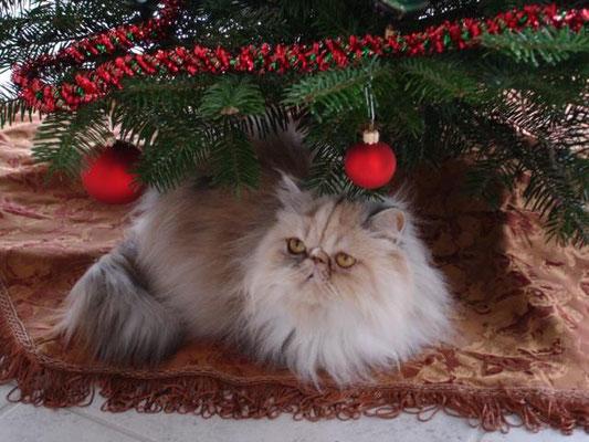 Und diesen Platz machte ihr an Weihnachten keiner streitig!