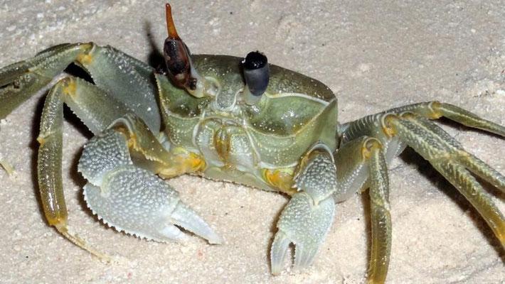 Nächtliche Strandbewohner