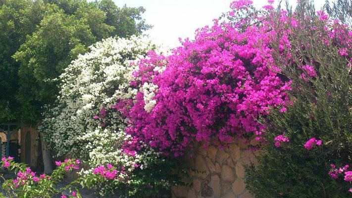 Wunderbare Blumenwelt