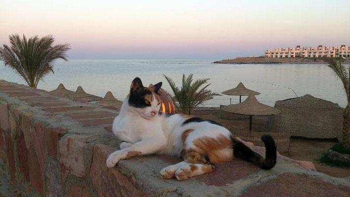 Die Resort Katze