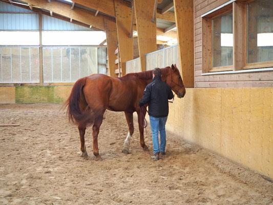 Retrouver son leadership avec l'aide du cheval