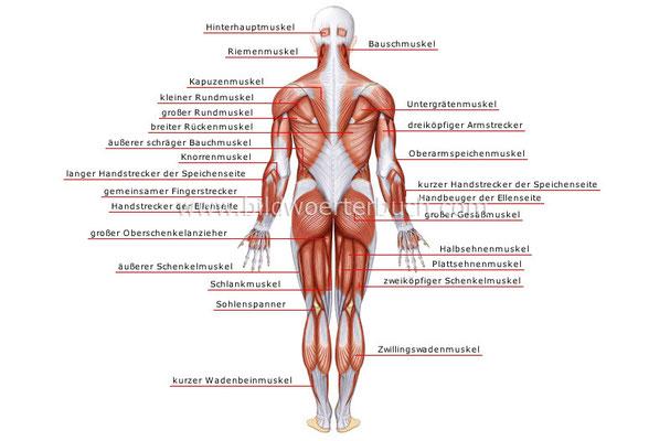 Bilder Mensch Körper Organe...... - marlene-schachners Webseite!