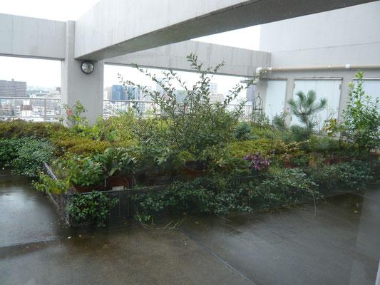 11F廊下から見える屋上庭園