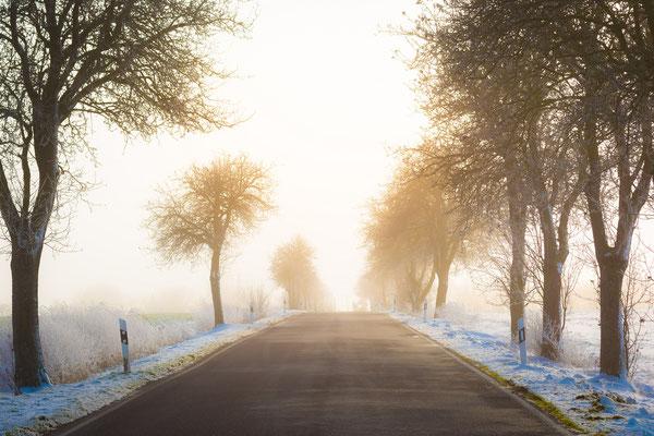 Allee bei Seeburg im Nebel im Winter