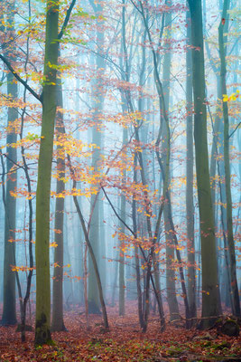 Wald im Südharz im Nebel