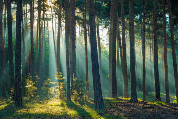 Sonnenstrahlen im Wald bei Quedlinburg