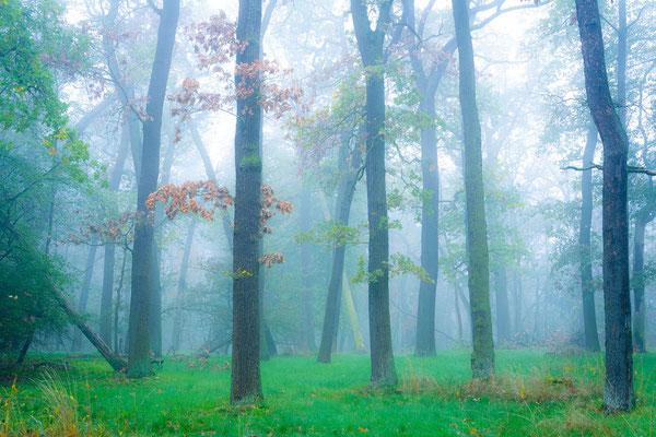 Nebel im Herbst in der Dölauer Heide