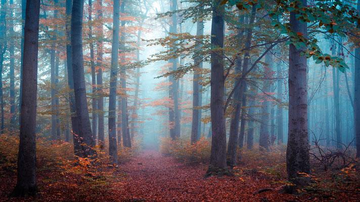 Herbstlaub und Nebel in der Heide