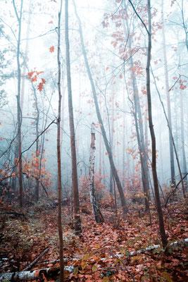 Nebel in der Dölauer Heide