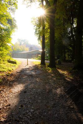 Blick zum Waldkater in der Heide an einem Morgen im Herbst