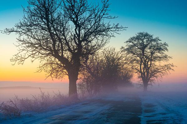 Allee im Seegebiet Mansfeld-Südharz im Nebel im Winter