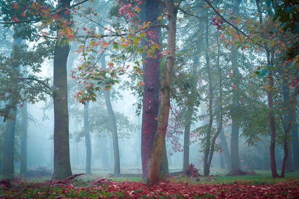 Bäume in der Heide im Nebel
