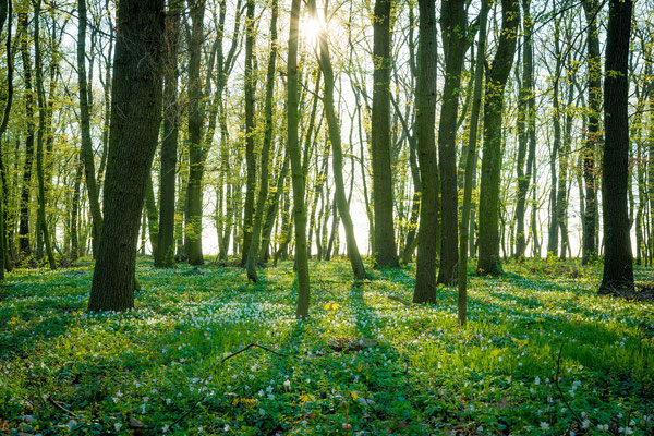 Wald bei Freyburg im Frühling