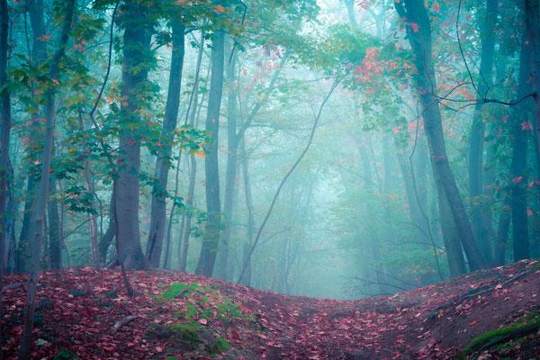 Waldweg in der Heid eim Nebel