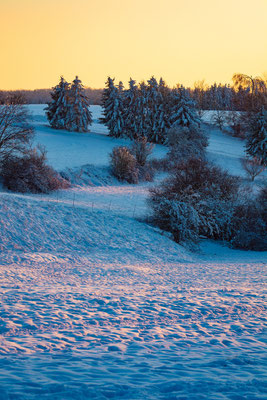 Wald im Harz im Winter