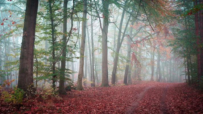 Waldweg in der Heide