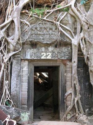 Dieses Tor führt in einen alten verfallenen Tempel von Angkor Wat in Kambodscha. Im 10. Jh. von den Khmer erbaut, wurde die Stadt später aufgegeben und wieder vom Urwald verschluckt. Die Wurzeln und Äste der Bäume umschlingen die steinernen Bauten.