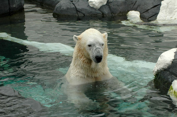 San Diego Reisetipps Zoo