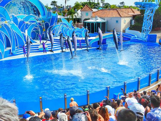 San Diego Urlaub Sea World