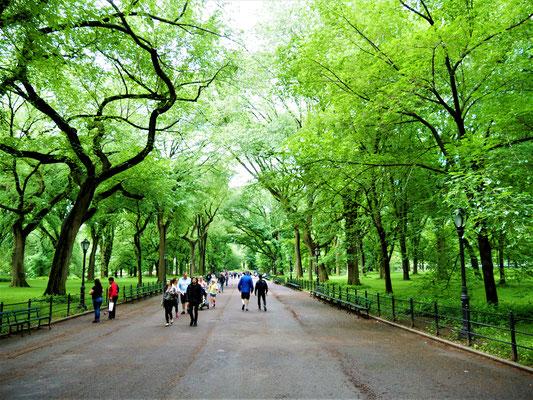 Bekannte Plätze in New York City Central Park